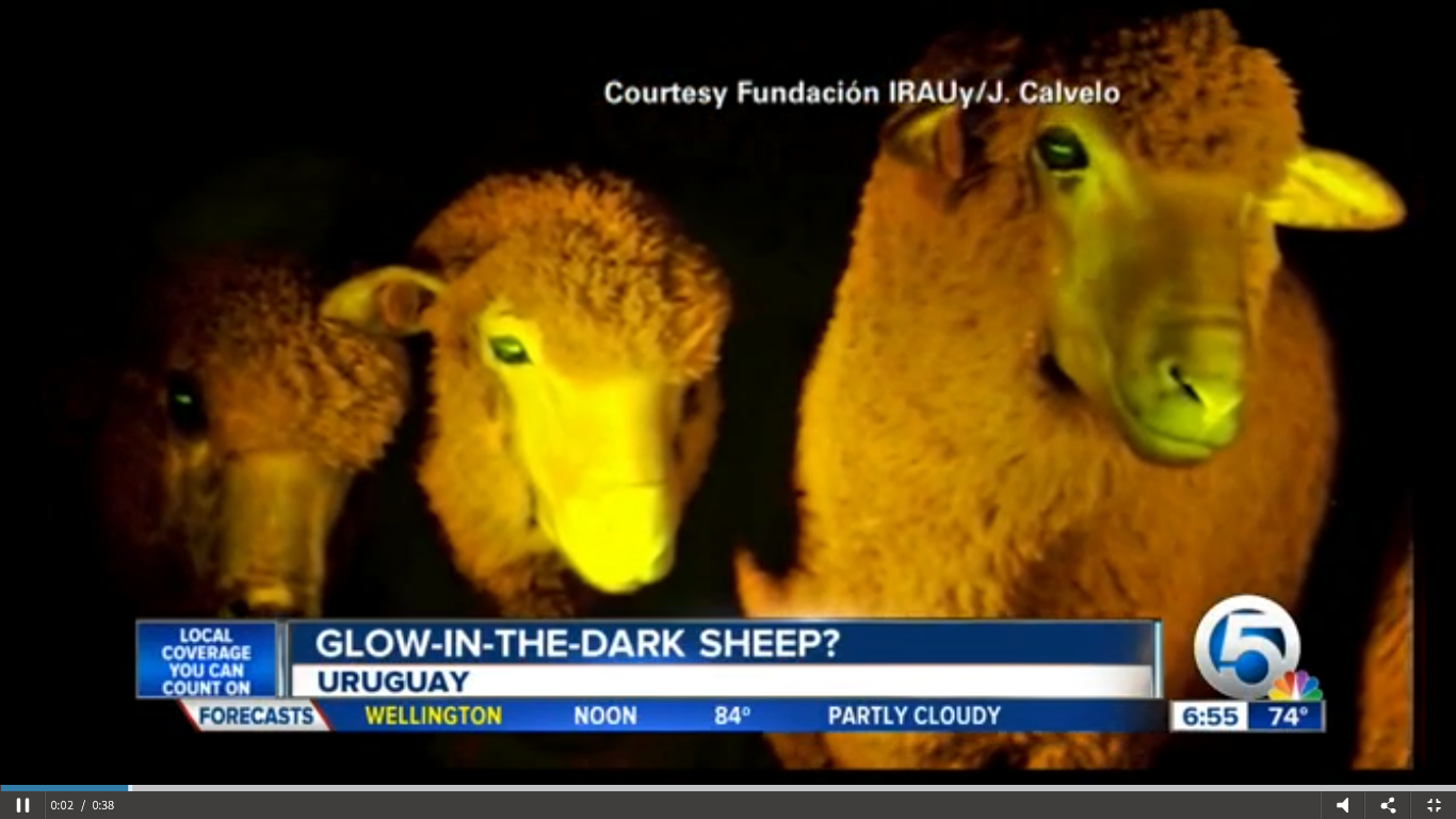 Glow-in-the-dark-sheep.png