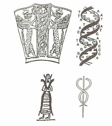 DNA Ancient drawing