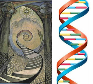 The Hierarchical Structure of DNA Ordering Humanity
