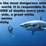 This is the most dangerous animal in the world