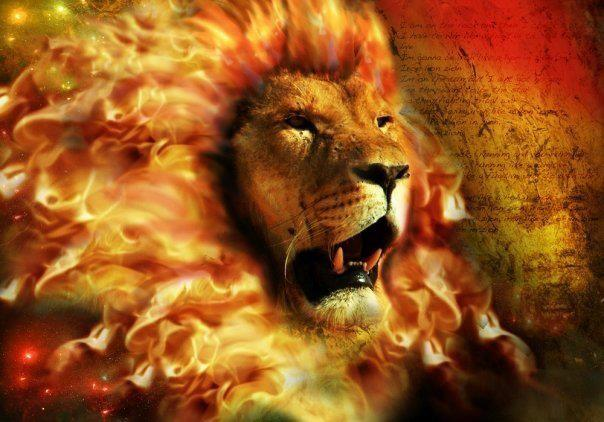 Tribe of judah lion