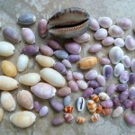 The Giver of Life: Cowry Shell