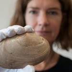 Scientists discover world's oldest evidence of humans on shells