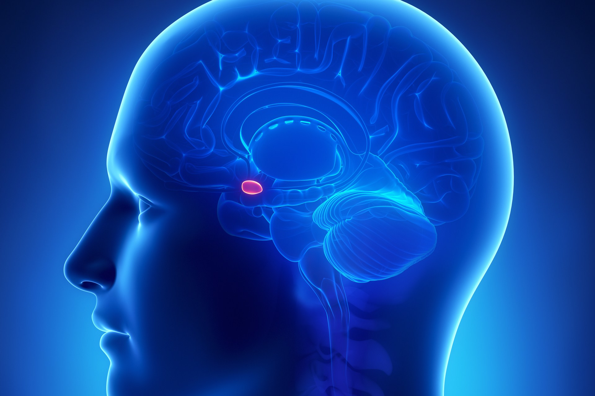 fear and the amygdala Fear is a human emotion that is triggered by a perceived threat our body also increases the flow of hormones to an area of the brain known as the amygdala to help us focus on the presenting danger and store it in our memory.