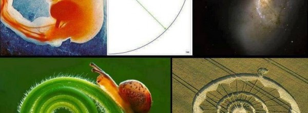 The Golden Ratio of Life
