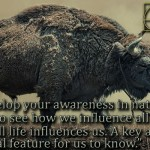 As you develop your awareness in nature, you begin to see how we influence all life