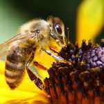 France bans all pesticides blamed for bee losses