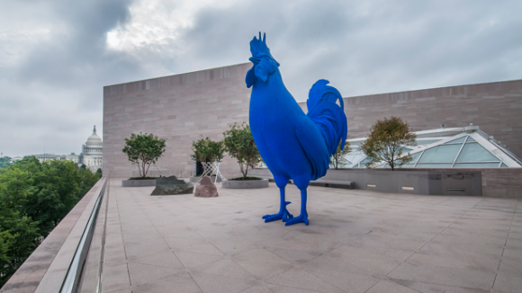 The Giant Royal Blue Cock(erel) of America