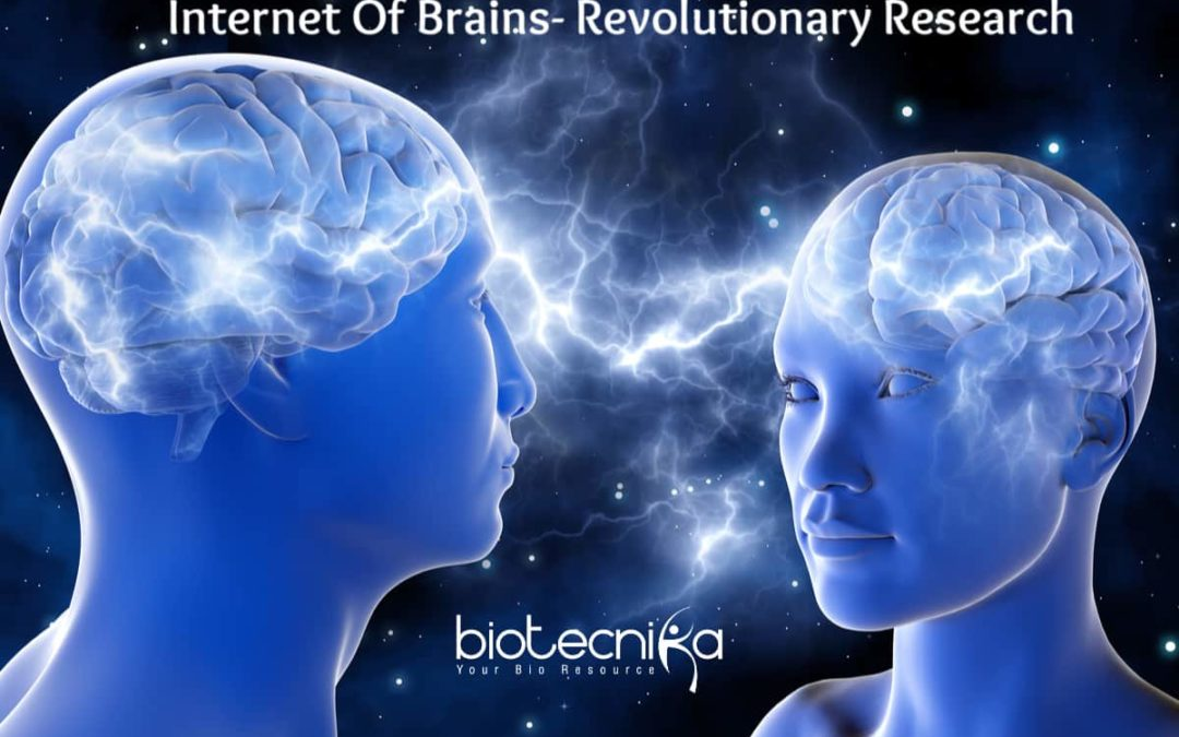 Scientists prove brain to brain communication creates internet super brain