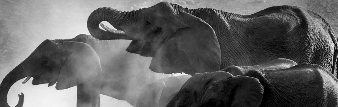 LEAD AN ELEPHANT TO WATER