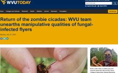 Parasitic mold that controls cicadas mind and forces them to infect other insects