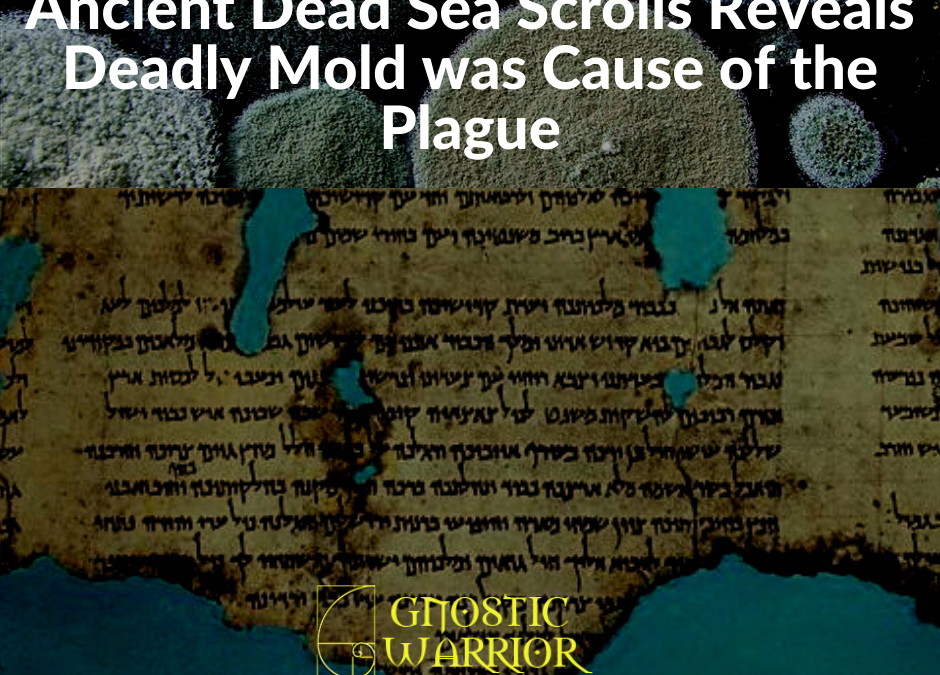 Ancient Dead Sea Scrolls Reveals Deadly Mold was Cause of the Plague