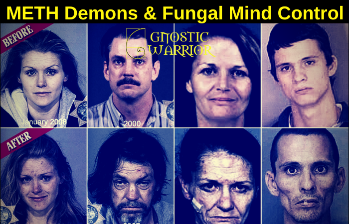 Meth Demons: How methamphetamine addicts develop parasitic fungal infections